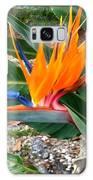 Bird Of Paradise Galaxy S8 Case