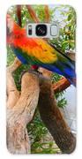 Brazilian Parrot Galaxy S8 Case