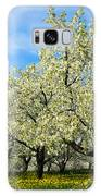 Cherry Blossoms Galaxy S8 Case