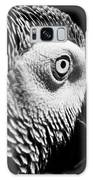 Congo African Grey 8 Galaxy S8 Case