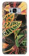 Croton Leaves Galaxy S8 Case