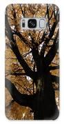Golden Fall Galaxy S8 Case