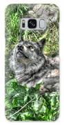 Grey Wolf Dreaming Galaxy S8 Case