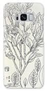 Historical Art Of Coca Plant Galaxy S8 Case