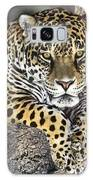 Jaguar Portrait Wildlife Rescue Galaxy Case by Dave Welling
