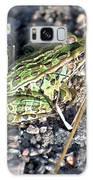 Leopard Frog In Gravel II Galaxy S8 Case