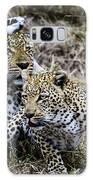 Leopard Tease Galaxy S8 Case