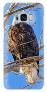 Majestic Bald Eagle Galaxy S8 Case