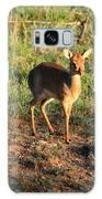 Masai Mara Dikdik Deer Galaxy S8 Case