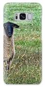 Middle Child - Blackfaced Sheep Galaxy S8 Case