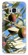 Olives (olea Europaea) On A Tree Galaxy S8 Case