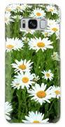 Ox-eye Daisies (leucanthemum Vulgare) Galaxy S8 Case
