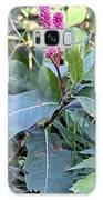 Pink Wildflower Galaxy S8 Case
