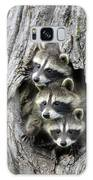 Raccoon Trio At Den Minnesota Galaxy Case by Jurgen and Christine Sohns