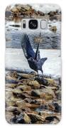 Raven Departs Galaxy S8 Case