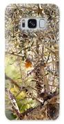 Robin Perched On Olive Tree Galaxy S8 Case
