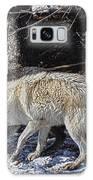 Rocky Mountain Encounter Galaxy S8 Case