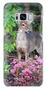 Spring Deer Galaxy S8 Case