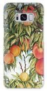 Summer Peaches Galaxy S8 Case