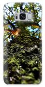 Tree Scales Galaxy S8 Case