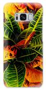 Tropical Croton Vignette Galaxy S8 Case