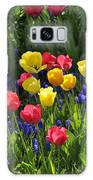 Tulips And Grape Hyacinths Galaxy S8 Case