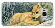 Waiting For Mom-mule Deer Fawn Galaxy S8 Case