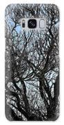 Winter Tree Hill End Nsw Galaxy S8 Case