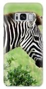 Zebra Galaxy S8 Case