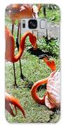 Flamingo Face-off Galaxy S8 Case