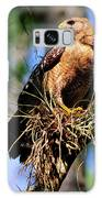 Red-shouldered Hawk Galaxy S8 Case