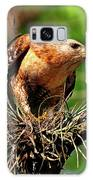 Red-shouldered Hawk With Breakfast Galaxy S8 Case