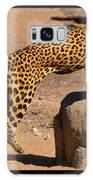 The Spotted Cat Galaxy S8 Case