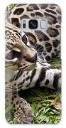 Young Ocelot Galaxy Case by Heiko Koehrer-Wagner