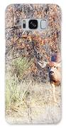 Mule Deer Doe Galaxy S8 Case