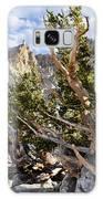 Ancient Bristlecone Pine Great Basin Galaxy Case by Kyle Hanson