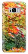 Arboretum Autumn Leaves Galaxy S8 Case