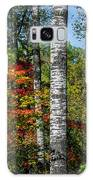 Aspens In Fall Forest Galaxy S8 Case