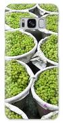 Baskets Of White Grapes Galaxy S8 Case