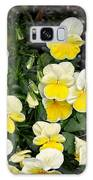 Beautiful Yellow Pansies Galaxy S8 Case