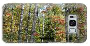 Birches In Fall Forest Galaxy S8 Case