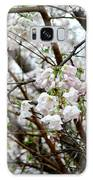 Blooming Apple Blossoms Galaxy S8 Case