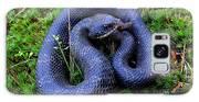 Blue Hognose Galaxy S8 Case