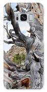 Bristlecone Pine Nevada Galaxy Case by Kyle Hanson