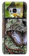 Butterfly Collage 1 Galaxy S8 Case