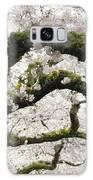 Cherry Blossoms 104 Galaxy S8 Case