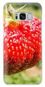 Close Up Shot Strawberry With Planting Strawberry Background Galaxy Case by Alex Grichenko