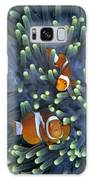 Clown Anemonefish Amphiprion Ocellaris Galaxy S8 Case