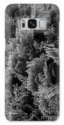 Cypress Branches No.1 Galaxy S8 Case