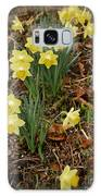 Daffodils With A Purple Flower Galaxy S8 Case